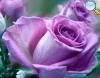 De cor violeta.