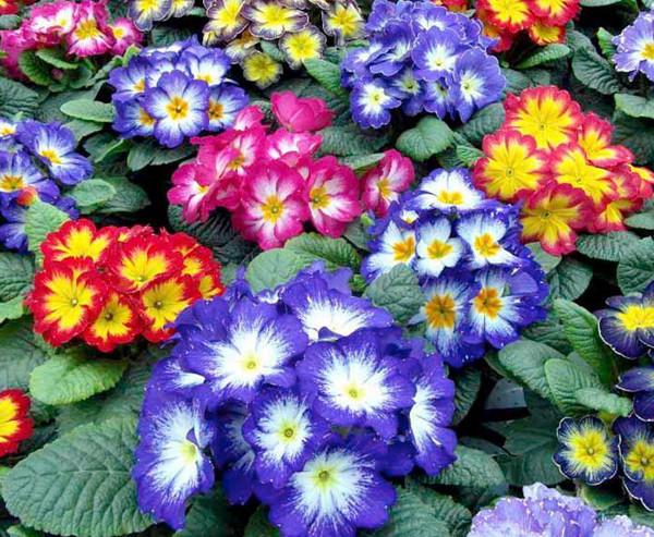 flores coloridas jardim:Jardim Com Flores Coloridas Jardins Com Flores De Sol Jardim Com
