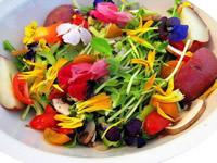 prato delicioso de flores