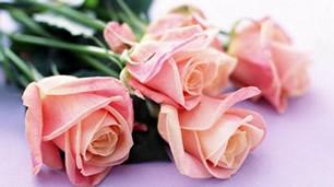 rosas individuais de cor rosa pálido